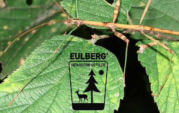 Eulbergs Heimische Gefilde: Mimikry, Mimese und Somatolyse