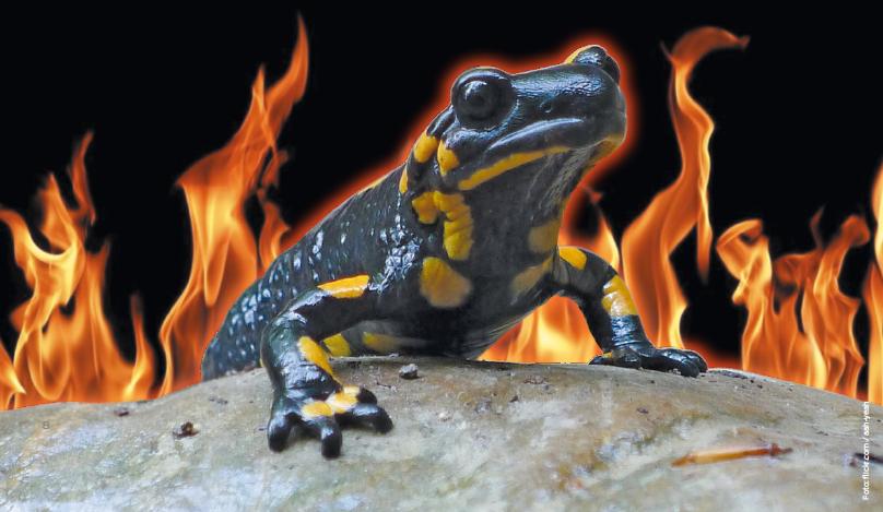 """Eulbergs heimische Gefilde: """"Brenzlich, brenzlich"""" – dachte der Feuersalamander"""