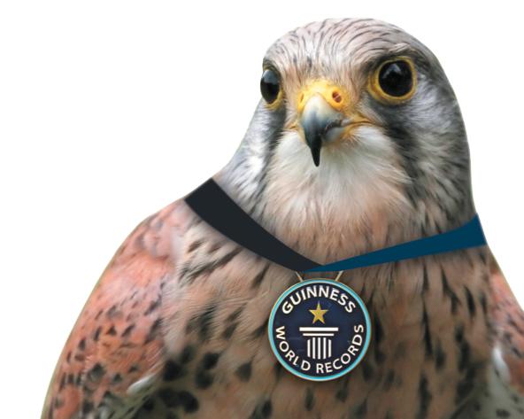 Eulbergs heimische Gefilde: Rekorde im Tierreich