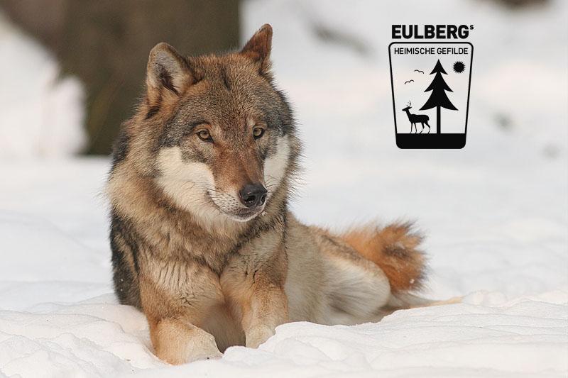 Eulbergs heimische Gefilde: Der Wolf
