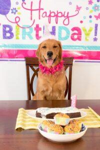 dog birthday hund geburtstag haustier